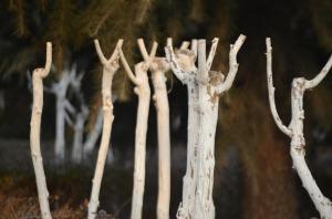 pruned-trees
