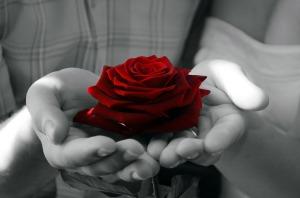 red-rose-1347966854SDs