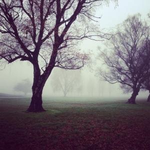 hazy-trees